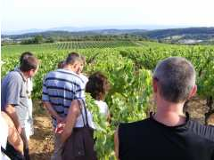 picture of Balade Vigneronne