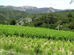 picture of Balades vigneronnes